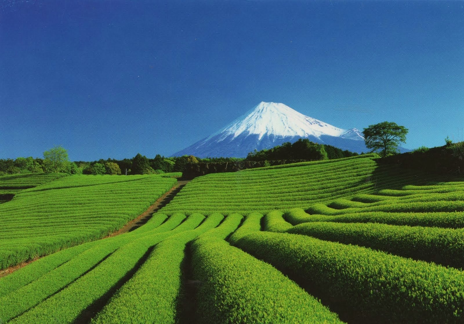 Экскурсия Токайдо и гора Фудзи