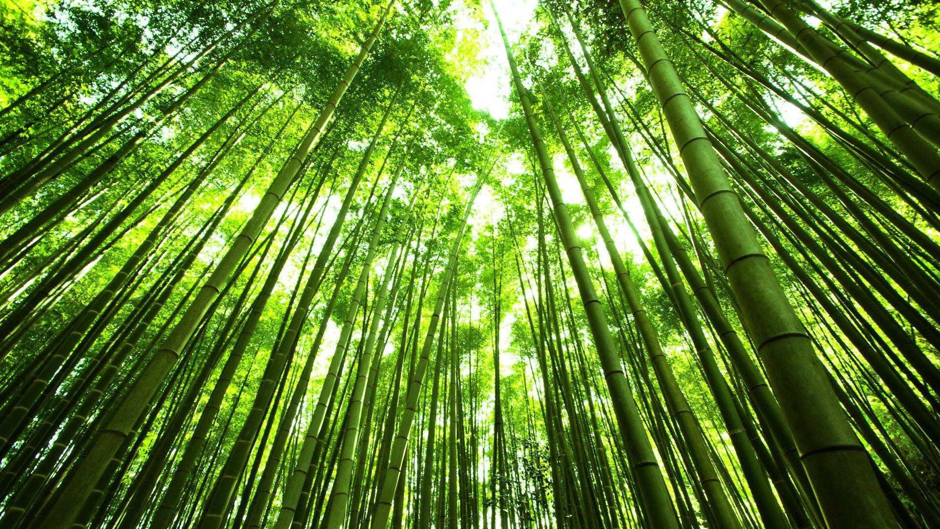 Что нужно увидеть в Японии