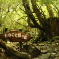 Лес принцессы Мононокэ