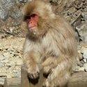 Экскурсия к обезьянам в Нагано