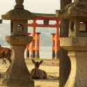Тур на сакуру в Японию 2020 /Стандарт