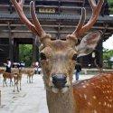 Парк Нара