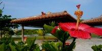Обзорная экскурсия: океанариум Тюрауми, мыс Манса, Коридзима, парк ананасов English