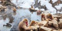 Снежные обезьяны и онсэны в Нагано