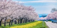 Префектура Акита