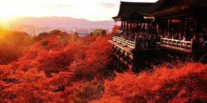"Экскурсия ""Киото после обеда"" English"