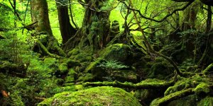 Якусима. Лес Прицессы Мононоке