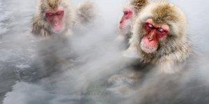 Экскурсия Снежные обезьяны