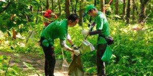 День зелени