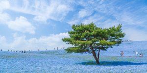 Префектура Ибараки