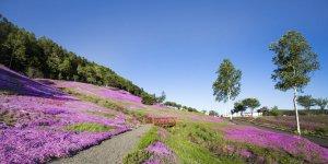 Префектура Тиба