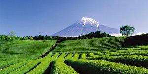 Префектура Сидзуока