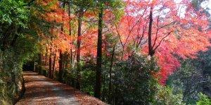 Первозданный лес горы Касуга-яма