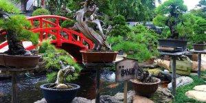 Музей бонсай в Токио