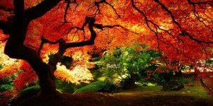 Осень в Японии: красные клены