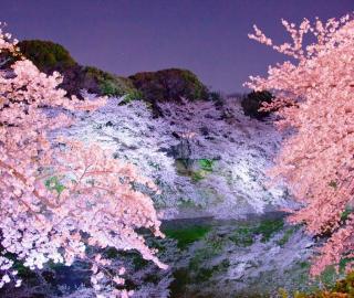 Тур на сакуру в Японию 2019 /Эконом