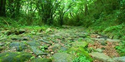 Кю-Токайдо и аллея криптомерий