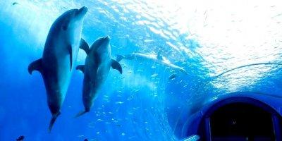 Аквапарк и Водный музей Хаккейдзима