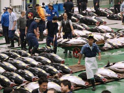 Открылся новый рыбный рынок Тоёсу