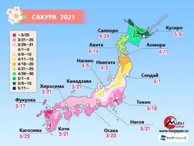 Прогноз цветения сакуры на 2021 год