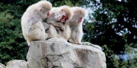 Парк обезьян и сад дикими травами