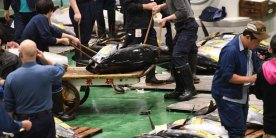 Рыбный рынок Тоёсу: покупатели, работники и оптовые торговцы на рынке