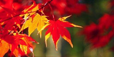 Осенние краски в Киото