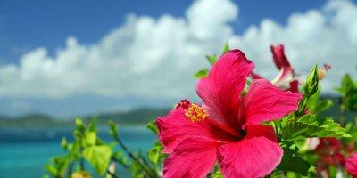 """Экскурсия """"Окинава для круизов"""""""