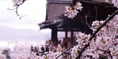 Киото. Когда цветёт сакура