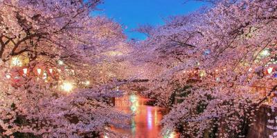 Экскурсия «Сакура в Токио»