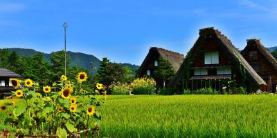 Экскурсия в Сиракаваго и Такаяму. English