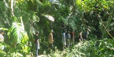 Пальмовый леc на о.Исигаки