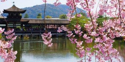 Тур на сакуру в Японию 2019 /Стандарт