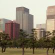 Токио. Парк с соснами у императорского дворца