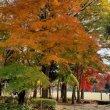 Цукуба. Осенние краски момидзи в одном из парков