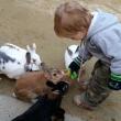 Усику. Кролики в парке Большого Будды Усику