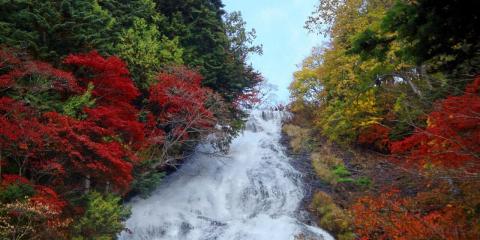 Префектура Тотиги
