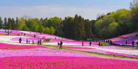 Префектура Сайтама