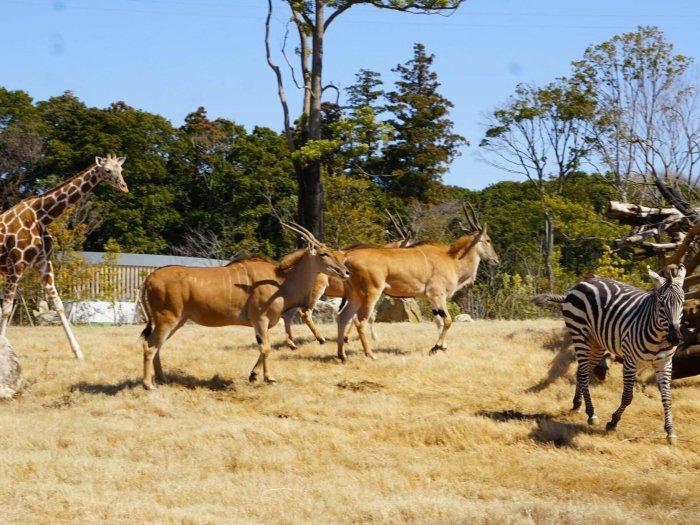 Зоопарк «Zoorasia»